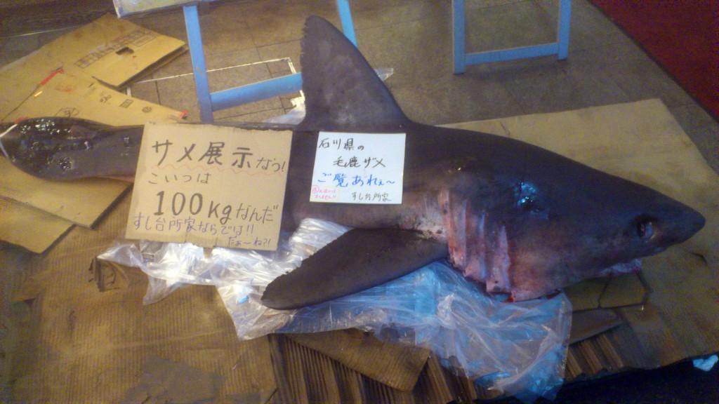 すし台所家 渋谷本店 サメの死骸