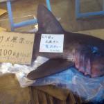 すし台所家 渋谷本店のサメ死骸が放置されニュースに【サメ画像あり】