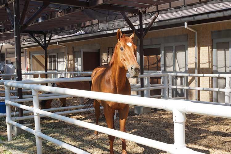 間近で見れるリアルな馬も東京競馬場の東側に3頭いる